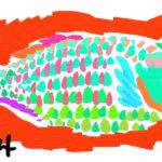 Key Largo Parrotfish