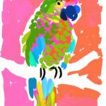 Key West Parrot
